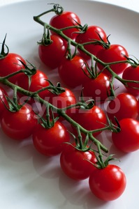vine tomatoes Stock Photo