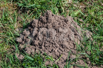 Molehill Stock Photo