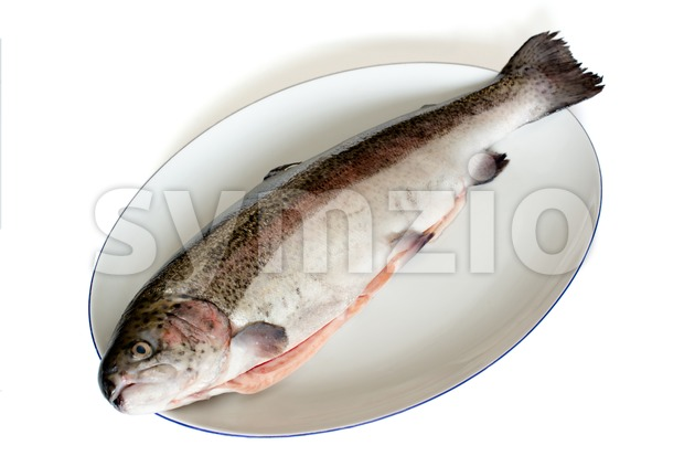 rainbow trout Stock Photo