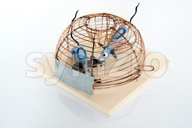 Conceptual photo of two twenty Euro bills trapped in mouse-trap - symbol for financial crisis or other business issues