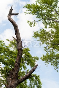 Old Tree Stock Photo
