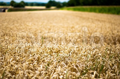 Different Fields Stock Photo