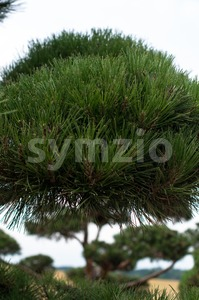 Garden Landscape. Topiary Stock Photo