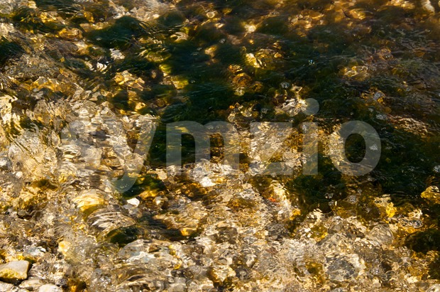 Moss and sea weed covered rocks Stock Photo