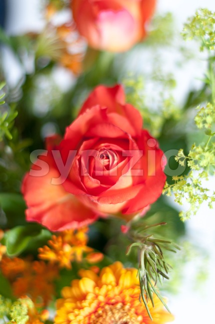 Orange Bouquet Stock Photo