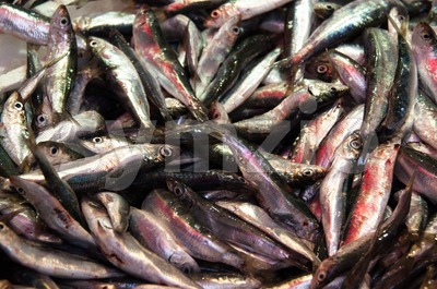 Sardines for sale Stock Photo