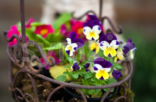 Spring flower basket Stock Photo