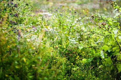 Field Of Wild Flowers Stock Photo