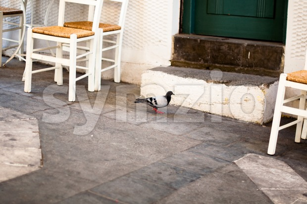 Cozy greek taverna with dove Stock Photo