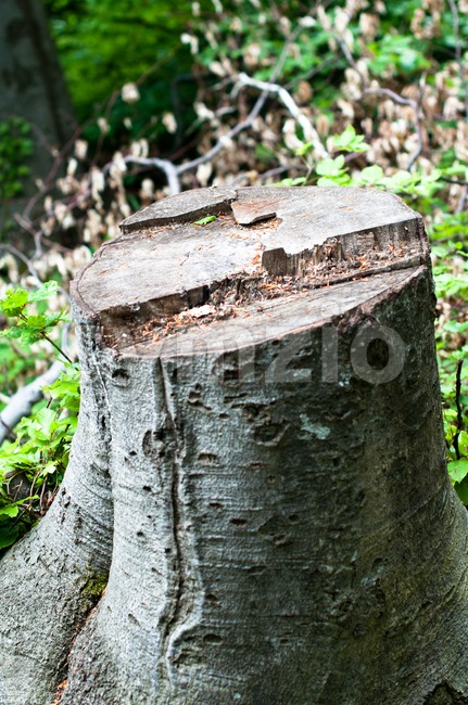 Felled Stock Photo