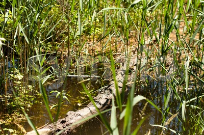 Wetlands Stock Photo