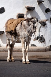 Spanish Donkey Stock Photo