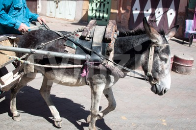Donkey Carriage Stock Photo