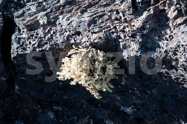 Lanzarote Soil And Plant Stock Photo