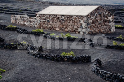 Lanzarote Winery Stock Photo