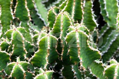 Green and White Cactus Stock Photo