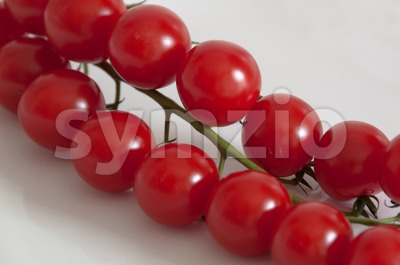 Cherry tomatoes on the vine Stock Photo